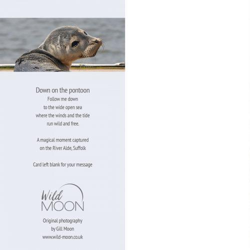 Seal Pup, Aldeburgh