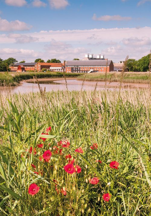 Summer at Snape Maltings