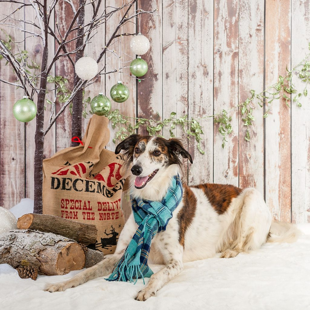 Christmas Pet Photography