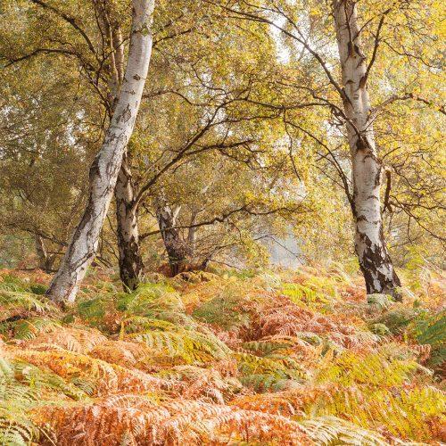 Autumn Wonderland, Sutton