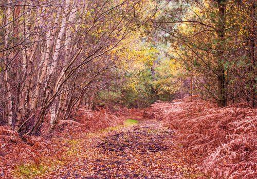 Autumn on Hollesley Common