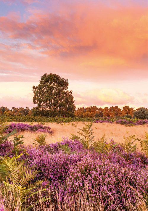 Violet Skies Hollesley Heath