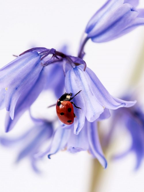 Ladybird by Rosey Nicholls