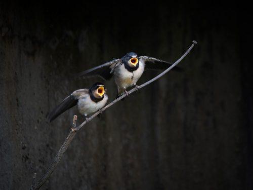 Flutter before the soar by Zoe Harris