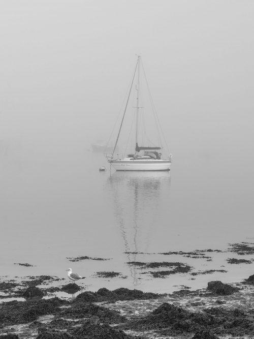 Misty Moorings by Richard Tricker